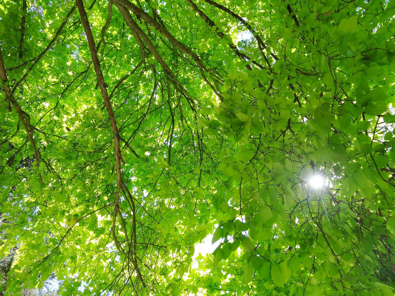Baum-mit-Sonne-M-60x45