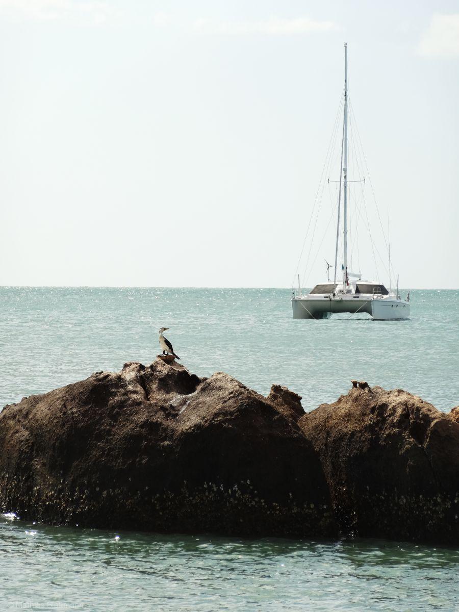 Schiff-bei-Vogel-M