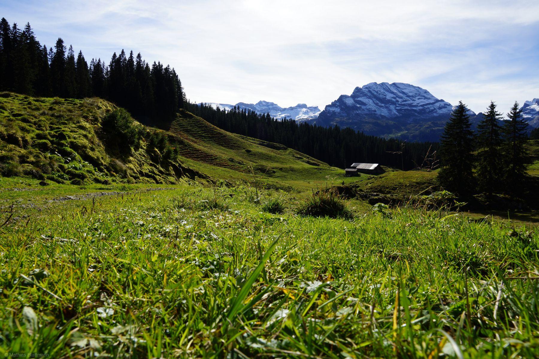 Gruen-Wiese-Wald