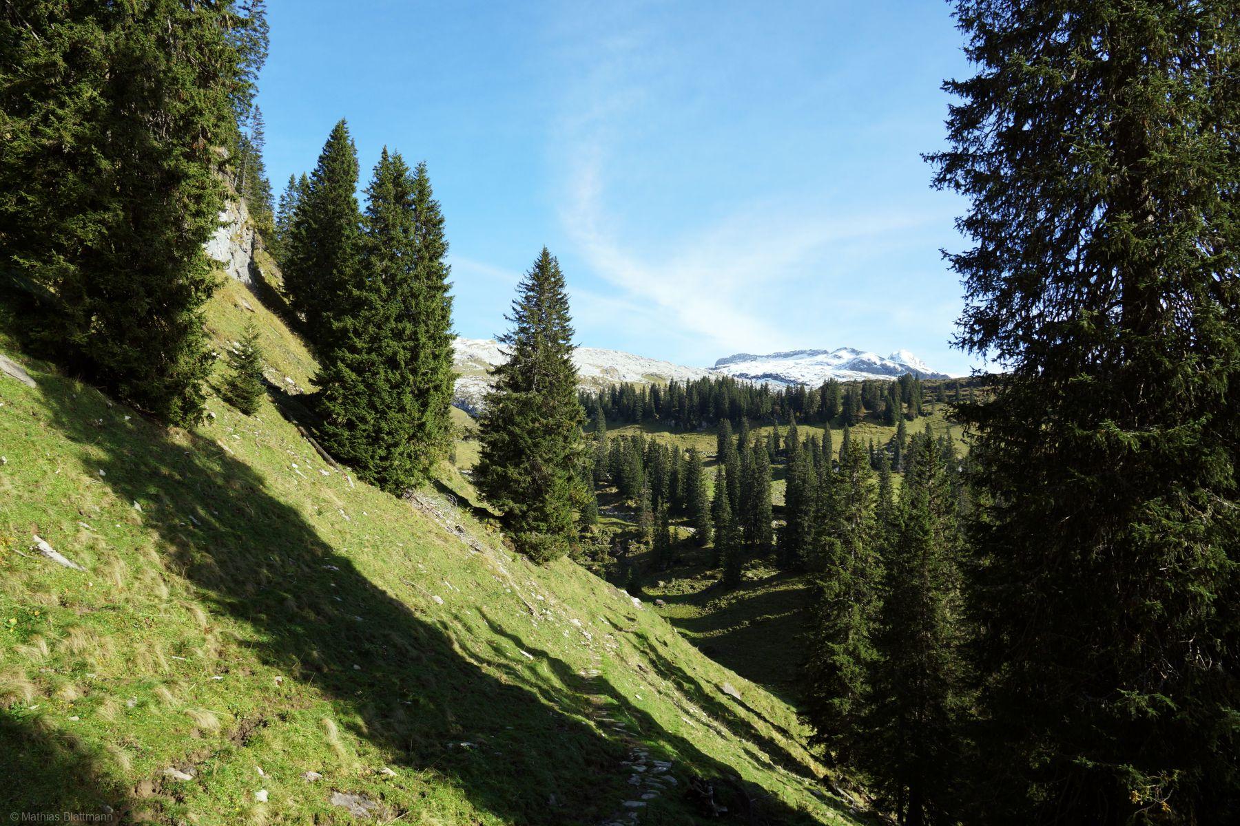Steil-Wald-Tannenbaum