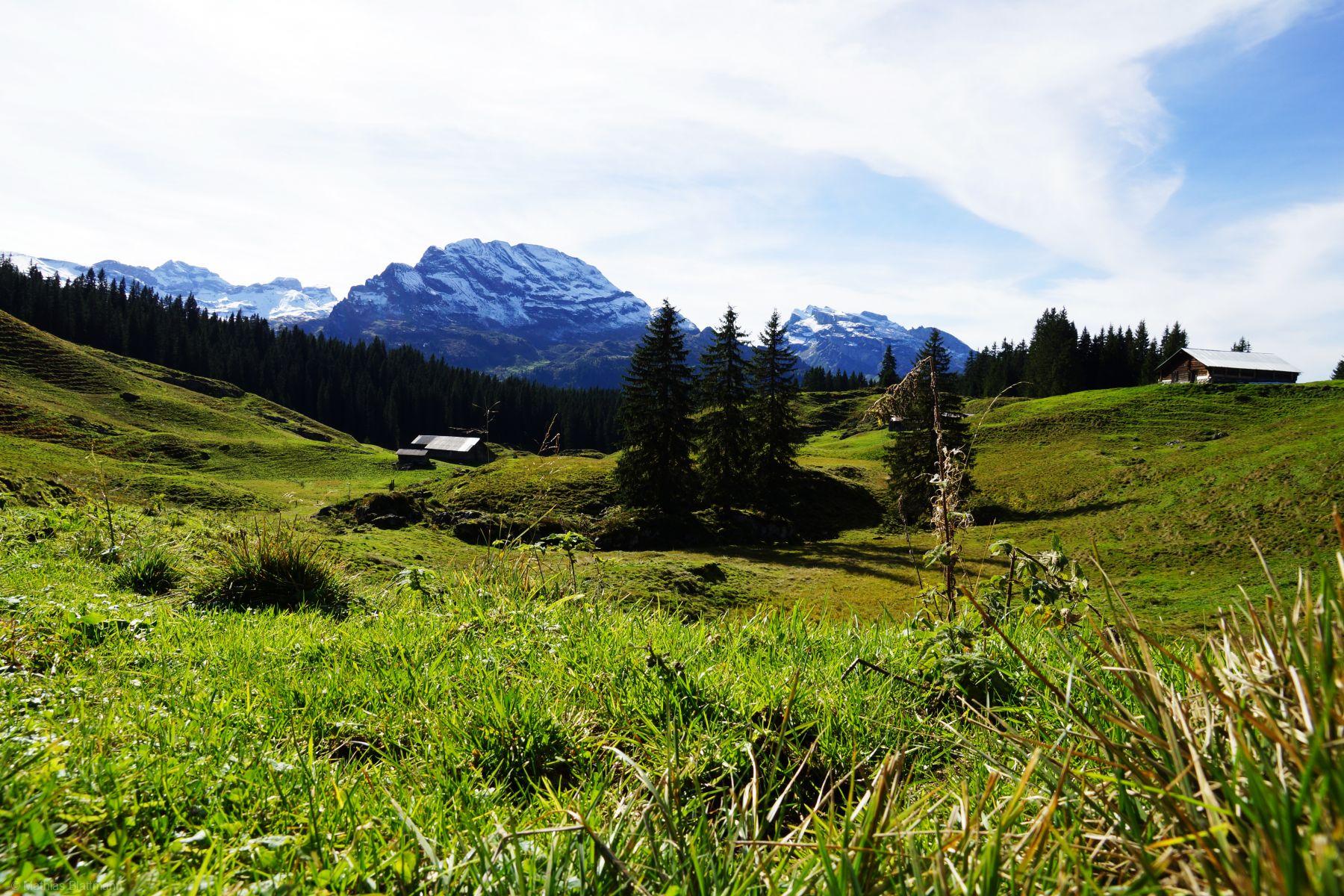 Wiese-Alp-Thal